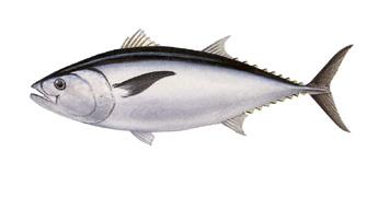 Рыбы в тихом океане список