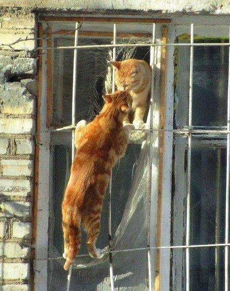 фото котят которые только радились #9