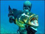 Shark_S аватар